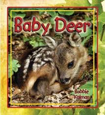 Baby Deer: It's Fun to Learn About Baby Animals