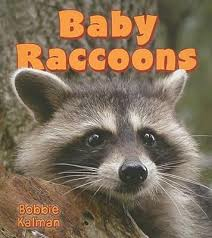 Baby Raccoons: It's Fun to Learn About Baby Animals