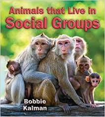 Animals that Live in Social Groups - Big Science Ideas